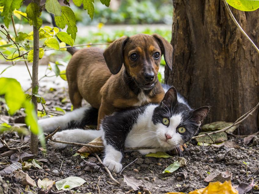 préposé au bien-être animal